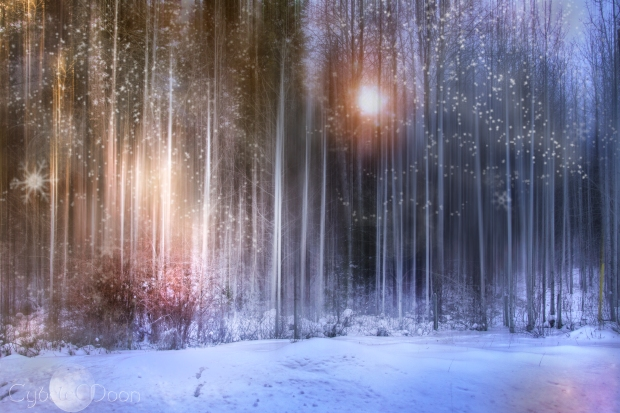 enchanted-forest-snow2