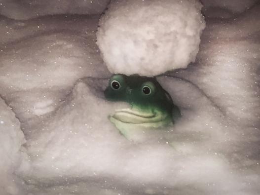 frog-snow2