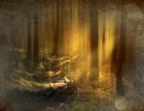 woodland-steps