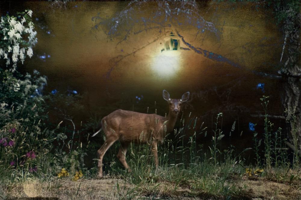 night visitors2