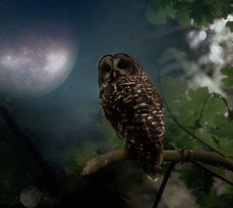 night visitors3