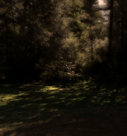 dimmer shadows
