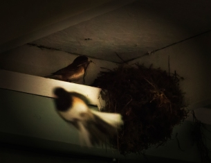 two nesting